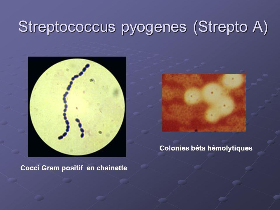 Streptococcus pyogenes (Strepto A)