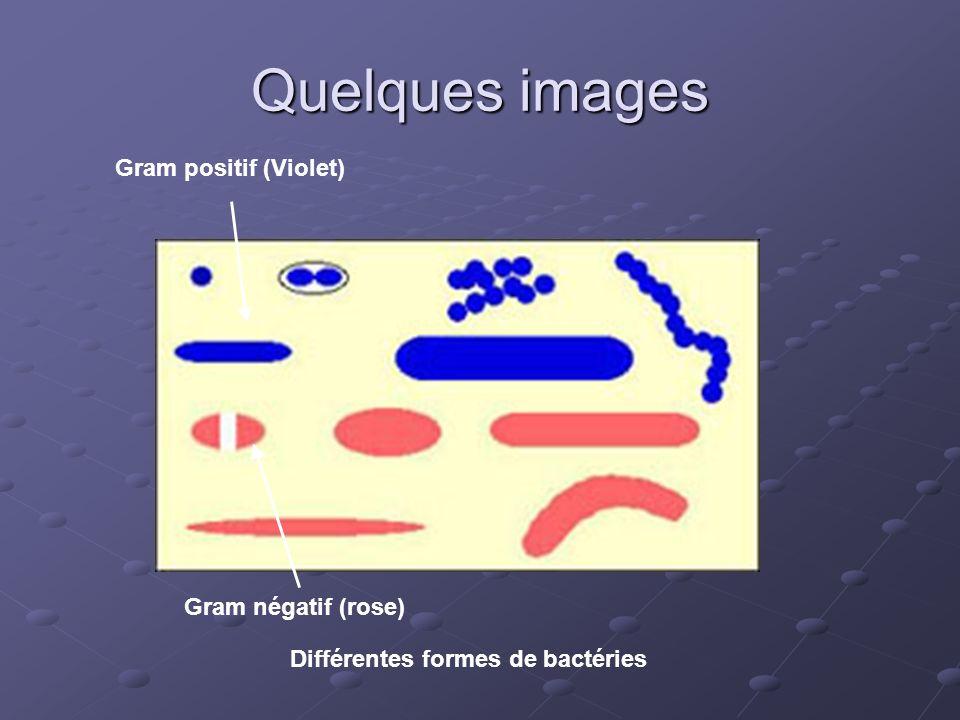 Différentes formes de bactéries