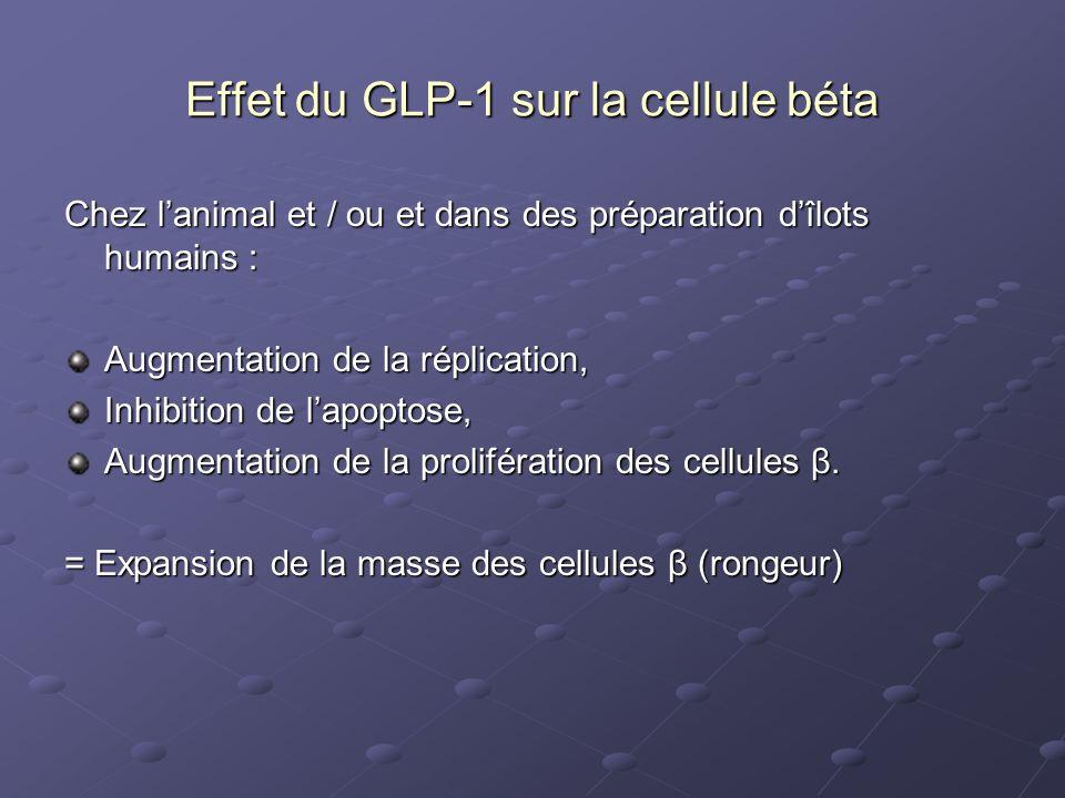Effet du GLP-1 sur la cellule béta