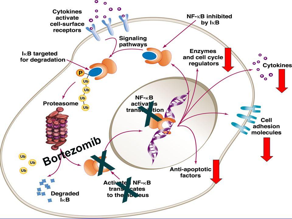 X Bortezomib 1