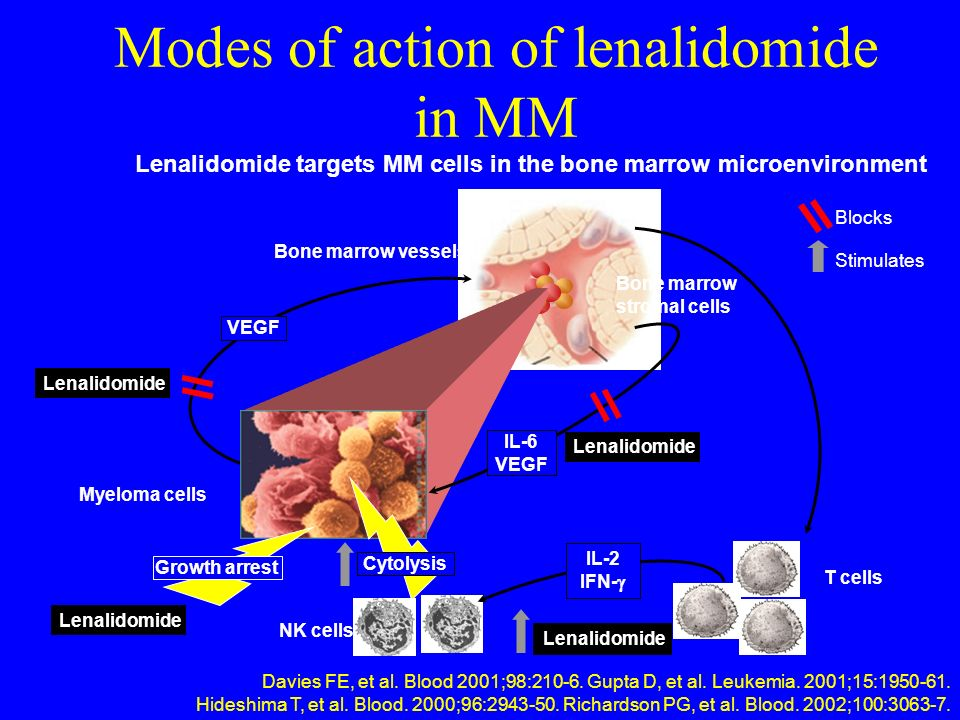 Modes of action of lenalidomide in MM