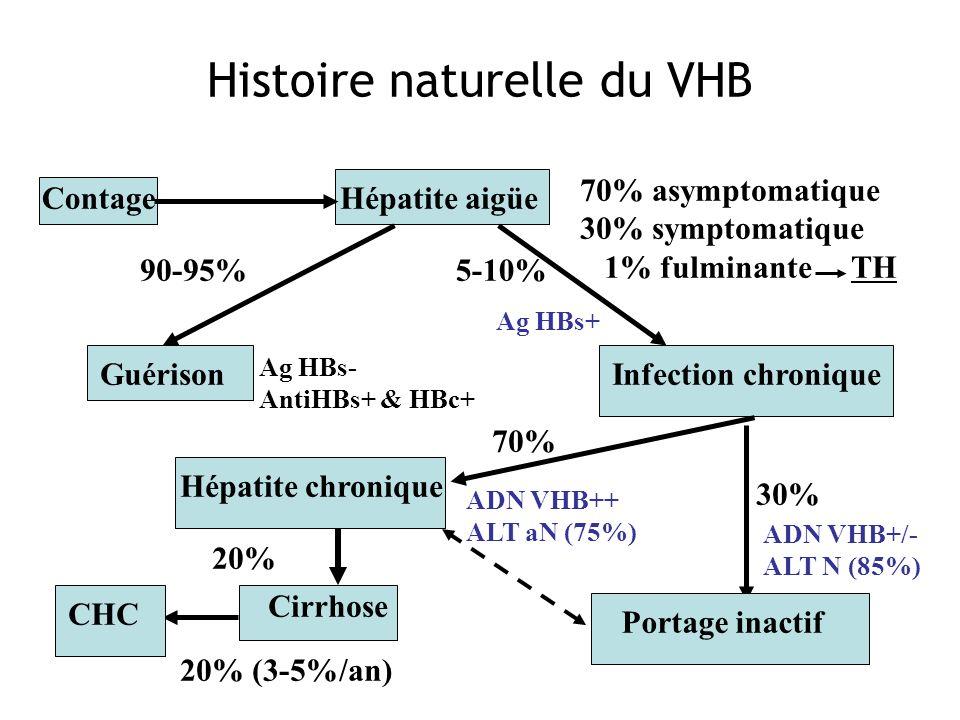 Histoire naturelle du VHB