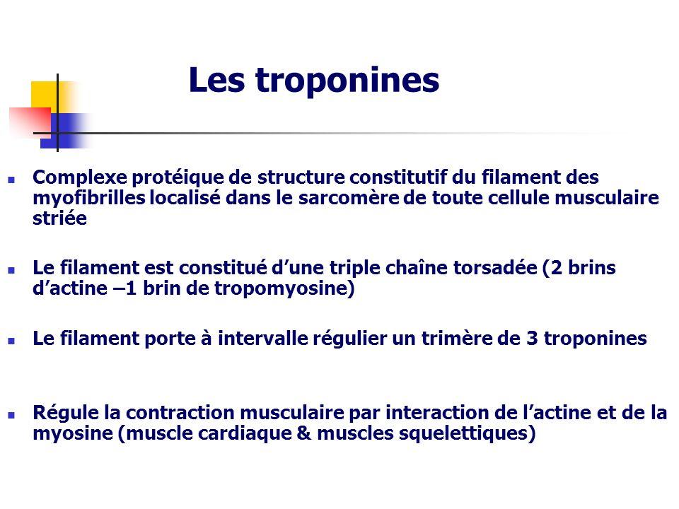 Les troponines Complexe protéique de structure constitutif du filament des myofibrilles localisé dans le sarcomère de toute cellule musculaire striée.