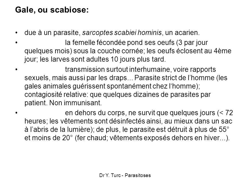 Gale, ou scabiose:due à un parasite, sarcoptes scabiei hominis, un acarien.
