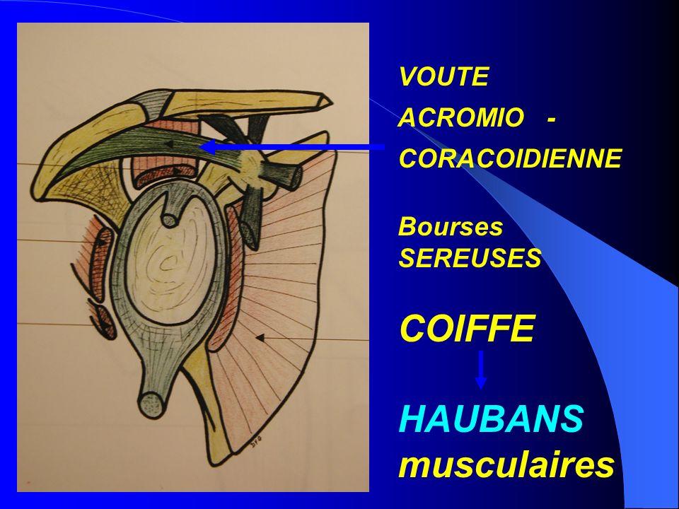 COIFFE HAUBANS musculaires VOUTE ACROMIO - CORACOIDIENNE