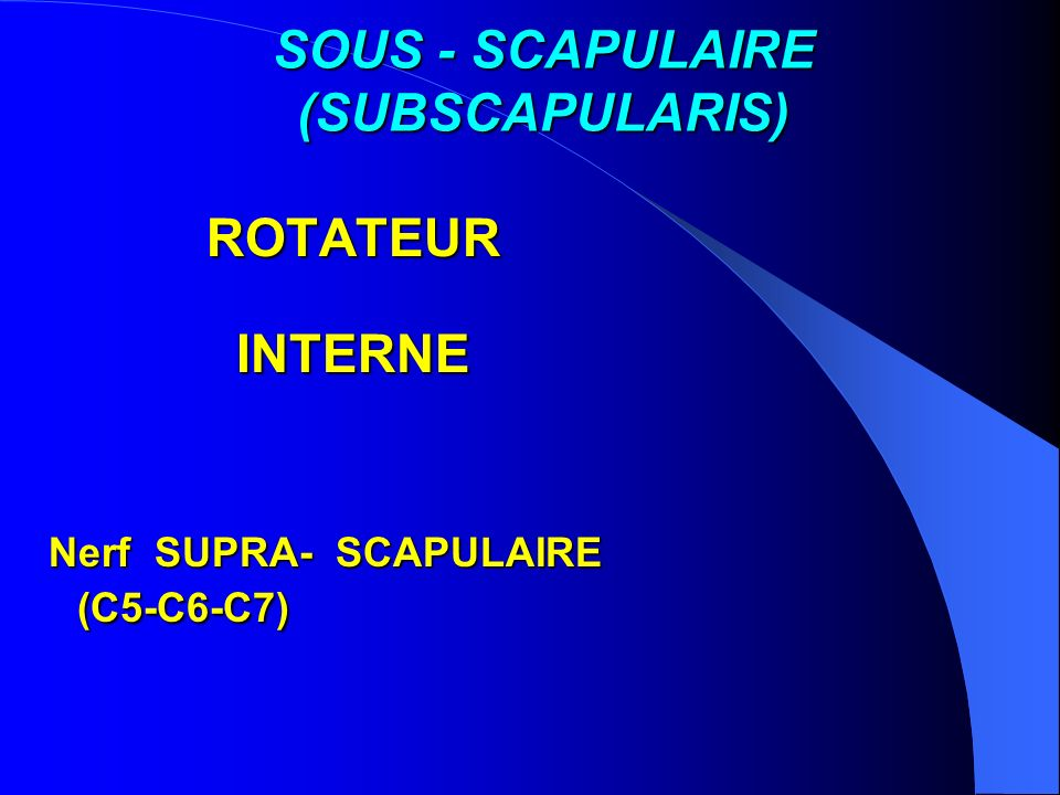 SOUS - SCAPULAIRE (SUBSCAPULARIS)