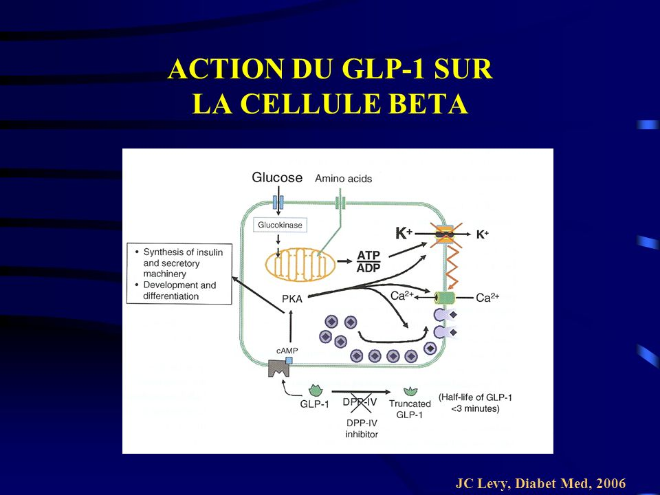 ACTION DU GLP-1 SUR LA CELLULE BETA