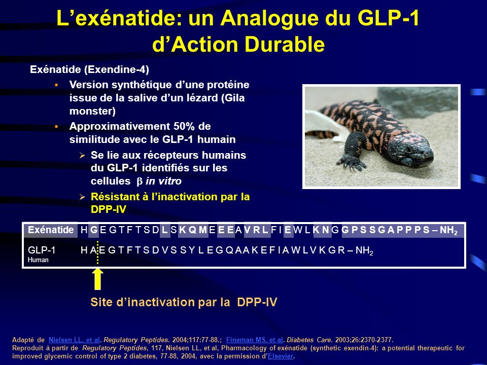 L'exénatide: un Analogue du GLP-1 d'Action Durable