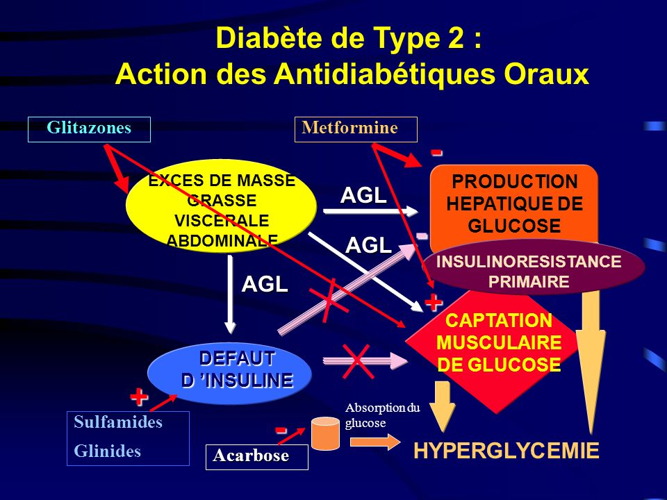 - - - + + Diabète de Type 2 : Action des Antidiabétiques Oraux AGL AGL