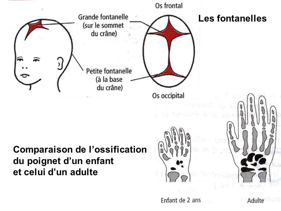 Les fontanelles Comparaison de l'ossification du poignet d'un enfant et celui d'un adulte