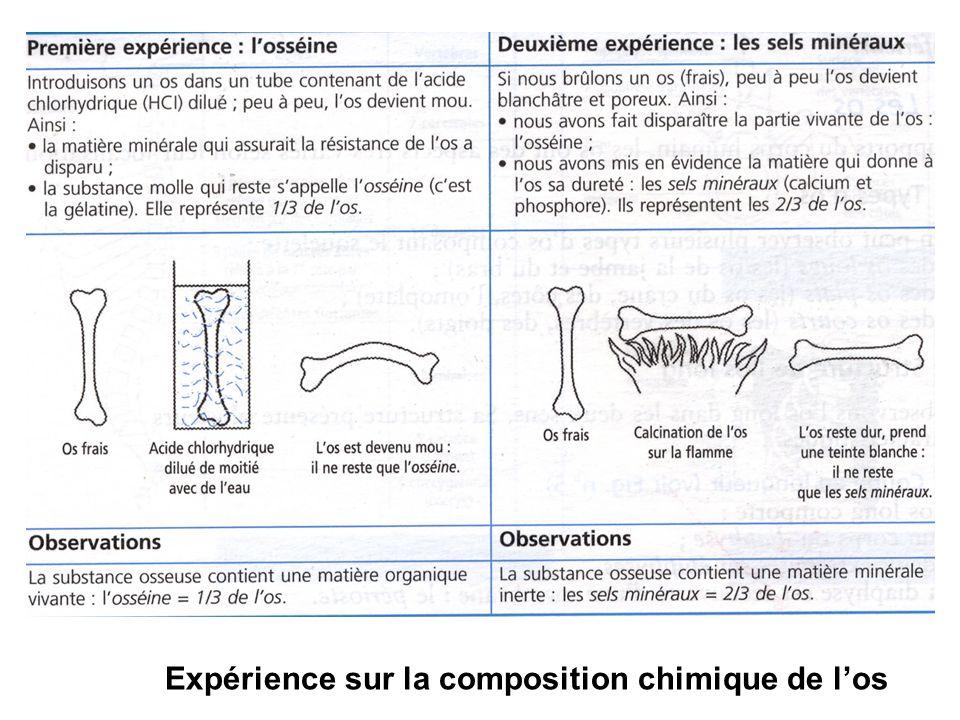 Expérience sur la composition chimique de l'os