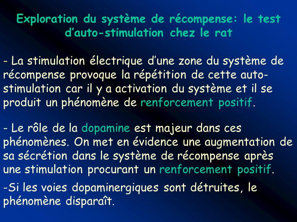 Exploration du système de récompense: le test d'auto-stimulation chez le rat