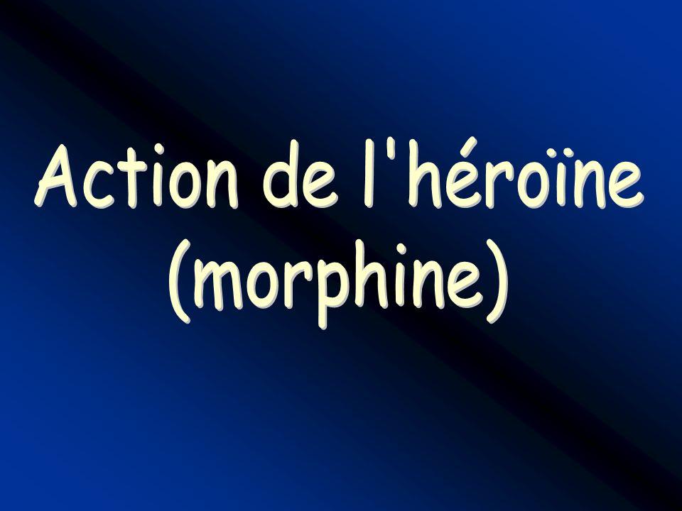 Action de l héroïne (morphine)
