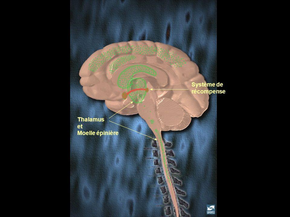Fixation de l 'héroïne dans le cerveau