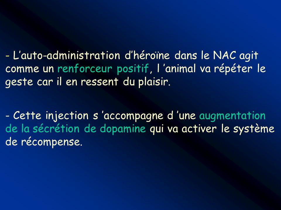 L'auto-administration d'héroïne dans le NAC agit comme un renforceur positif, l 'animal va répéter le geste car il en ressent du plaisir.
