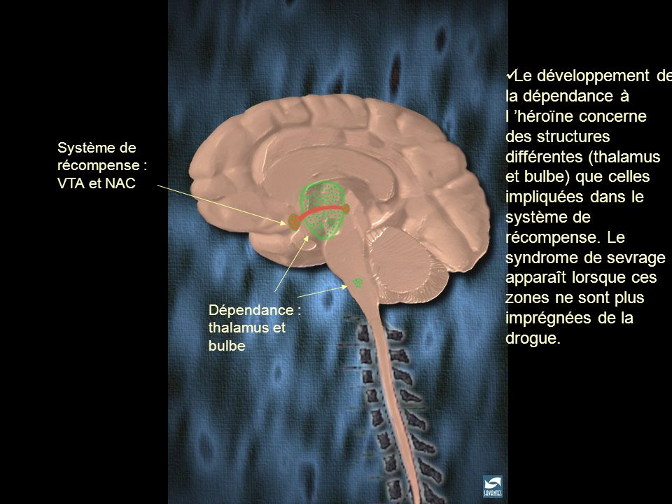 Le développement de la dépendance à l 'héroïne concerne des structures différentes (thalamus et bulbe) que celles impliquées dans le système de récompense. Le syndrome de sevrage apparaît lorsque ces zones ne sont plus imprégnées de la drogue.