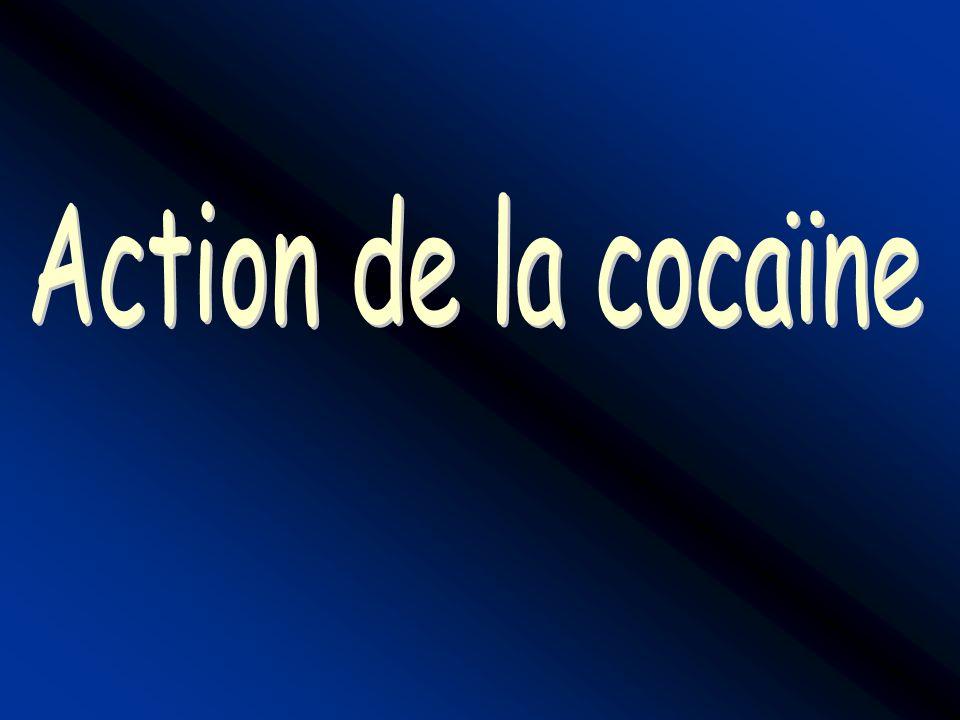 Action de la cocaïne