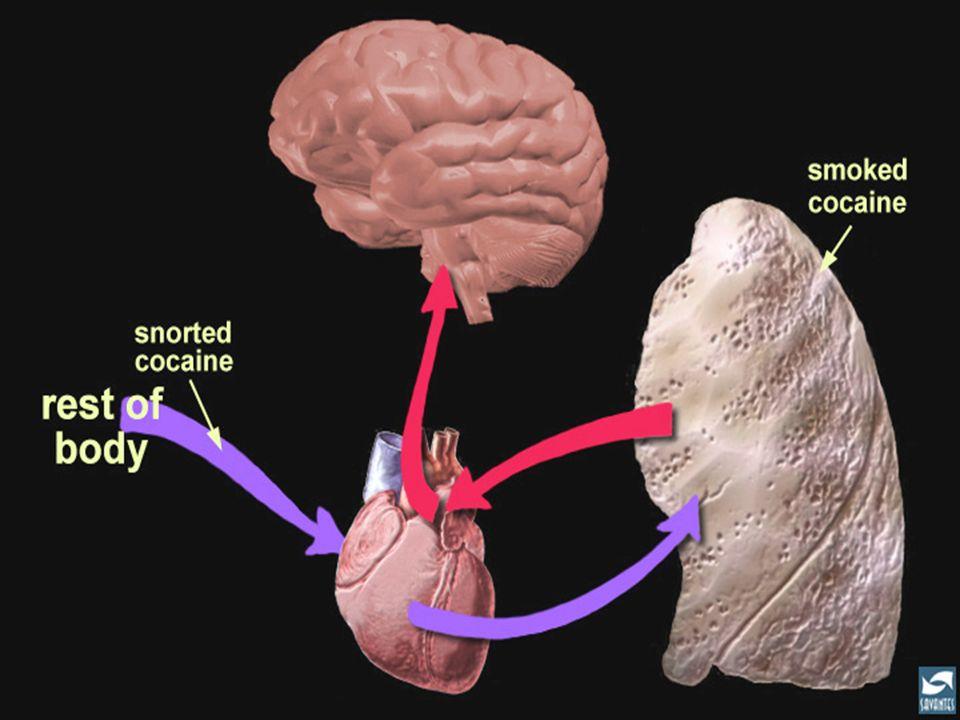 Entre sniffée et fumée, le potentiel toxicomanogène est différent