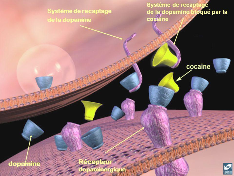 Récepteur dopamine Système de recaptage