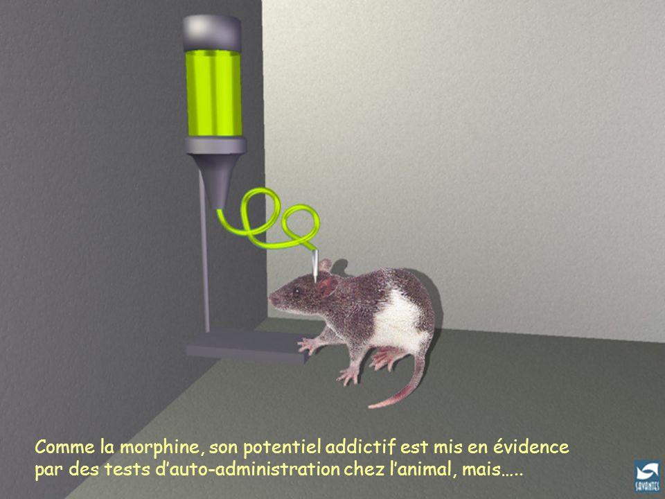 Auto-administration chez le rat