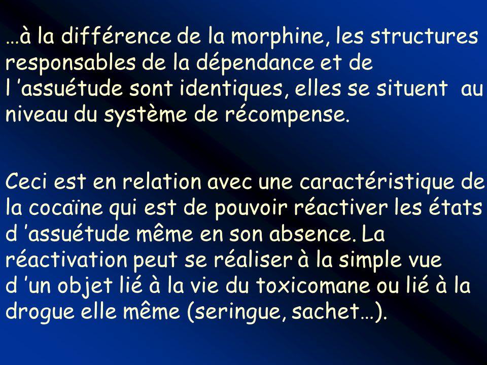 …à la différence de la morphine, les structures responsables de la dépendance et de l 'assuétude sont identiques, elles se situent au niveau du système de récompense.
