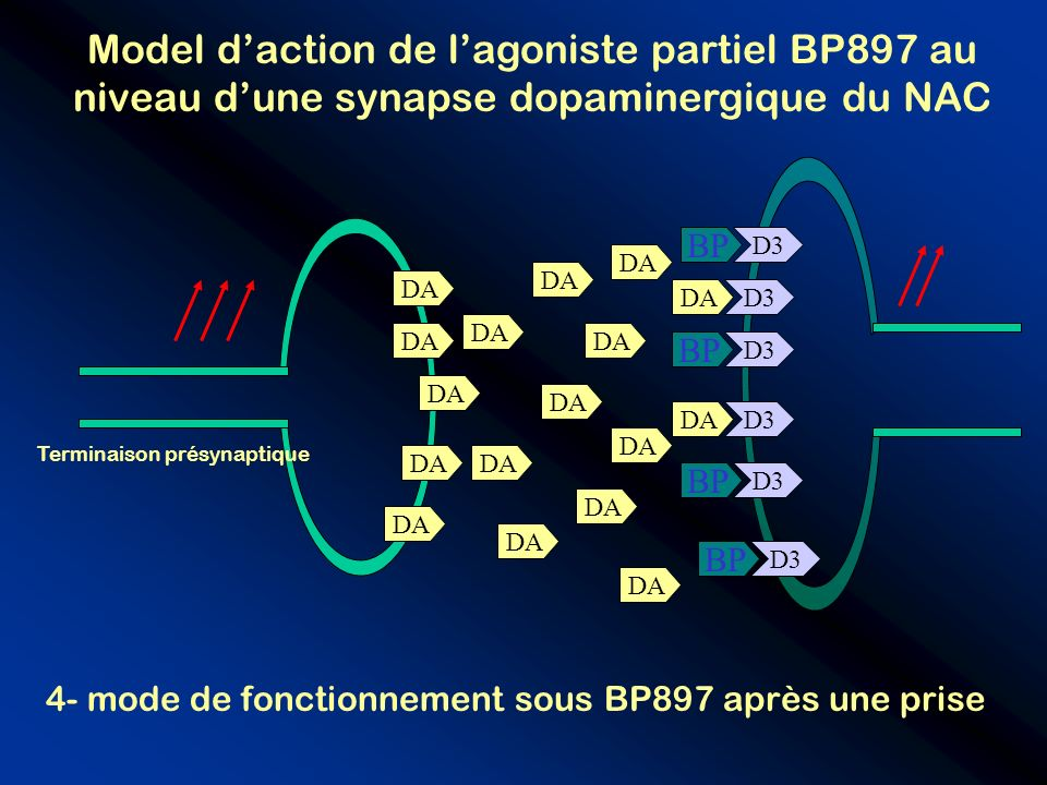 Model d'action de l'agoniste partiel BP897 au niveau d'une synapse dopaminergique du NAC