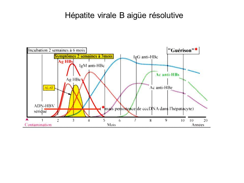Hépatite virale B aigüe résolutive