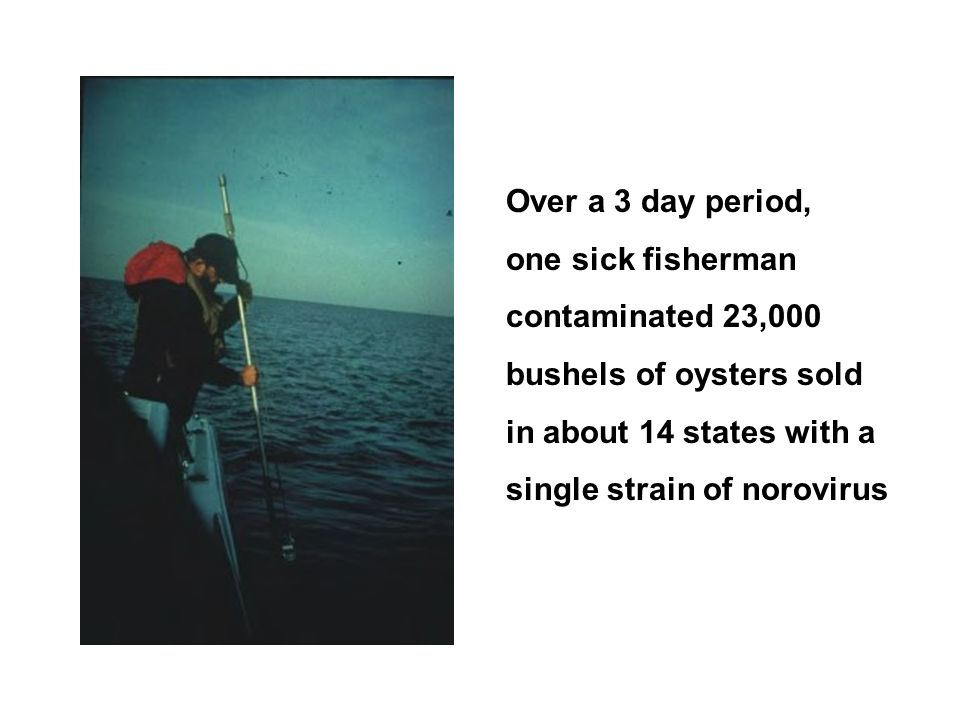 Over a 3 day period, one sick fisherman. contaminated 23,000. bushels of oysters sold. in about 14 states with a.
