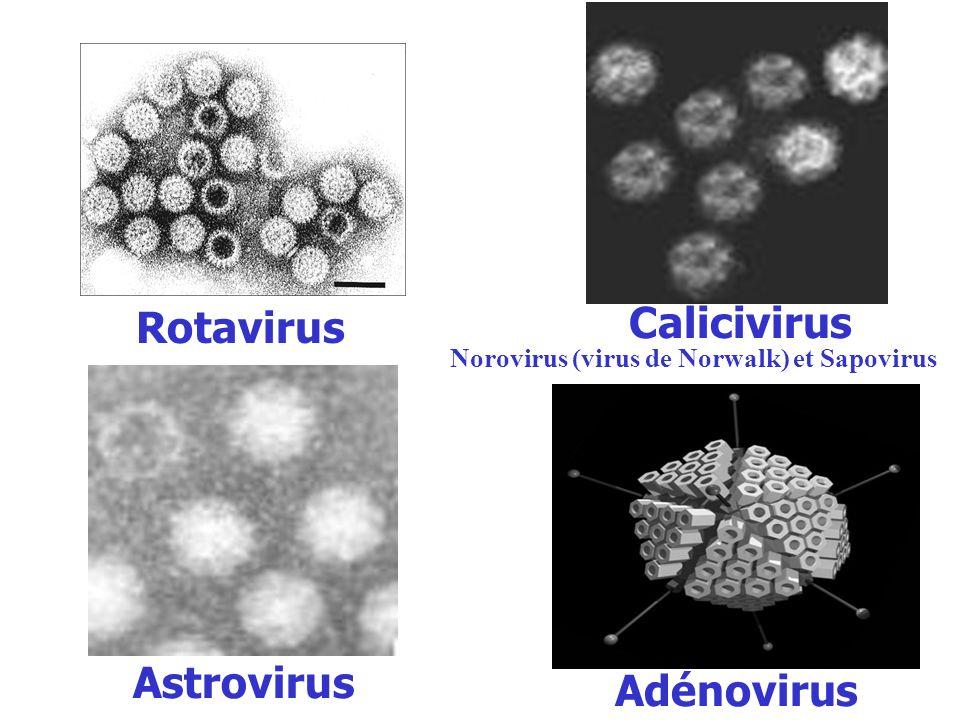 Rotavirus Calicivirus Astrovirus Adénovirus
