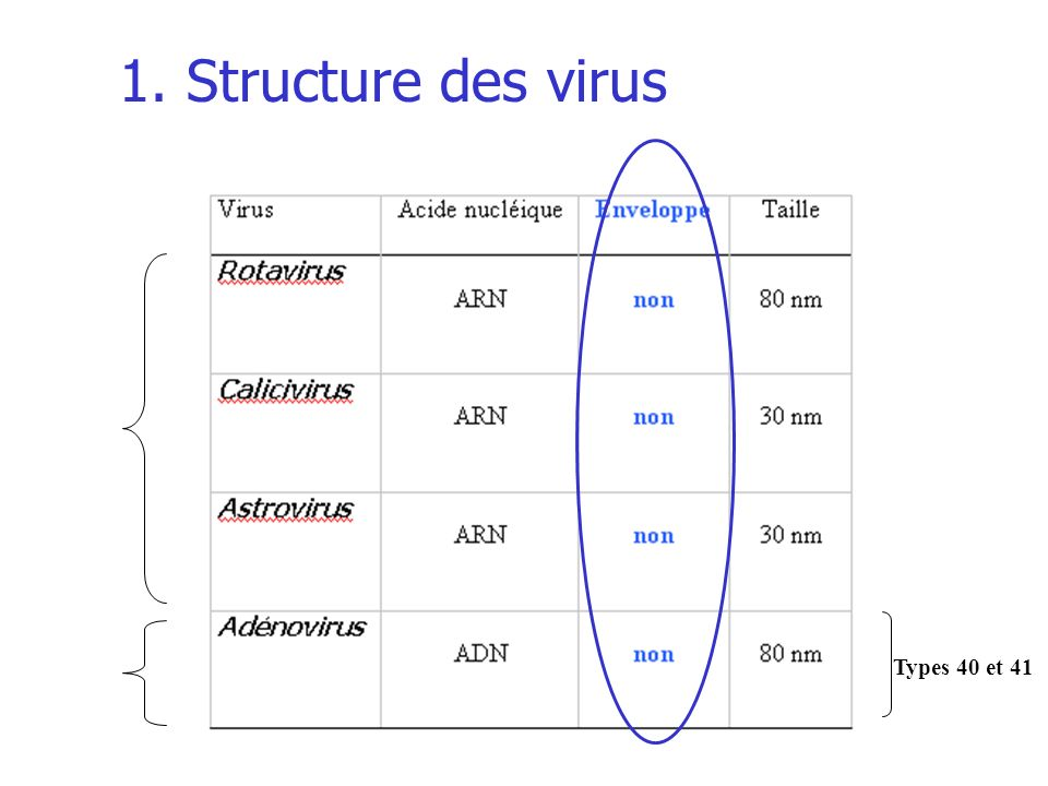 1. Structure des virus Types 40 et 41