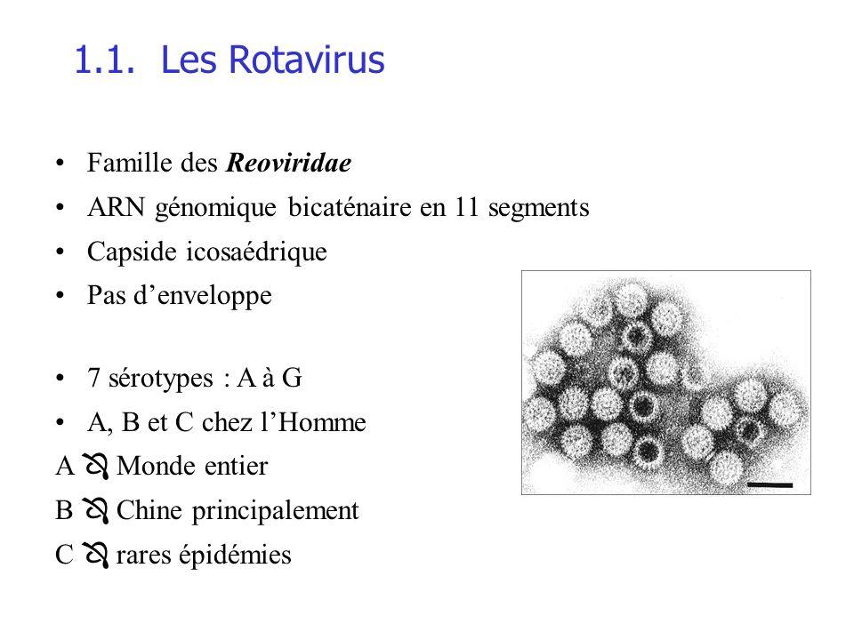 1.1. Les Rotavirus Famille des Reoviridae