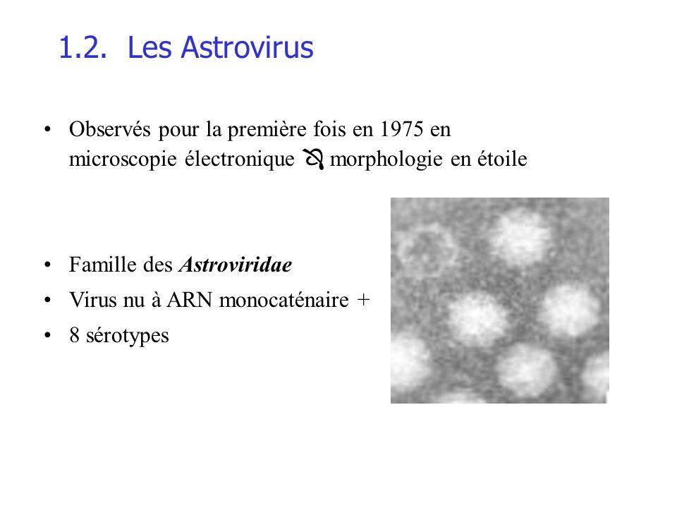 1.2. Les Astrovirus Observés pour la première fois en 1975 en microscopie électronique  morphologie en étoile.