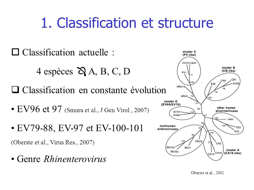 1. Classification et structure
