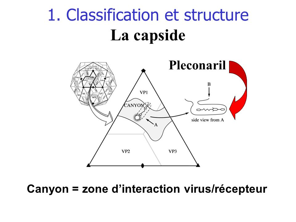 1. Classification et structure La capside