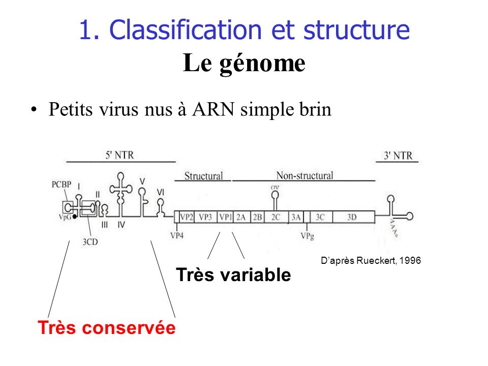 1. Classification et structure Le génome