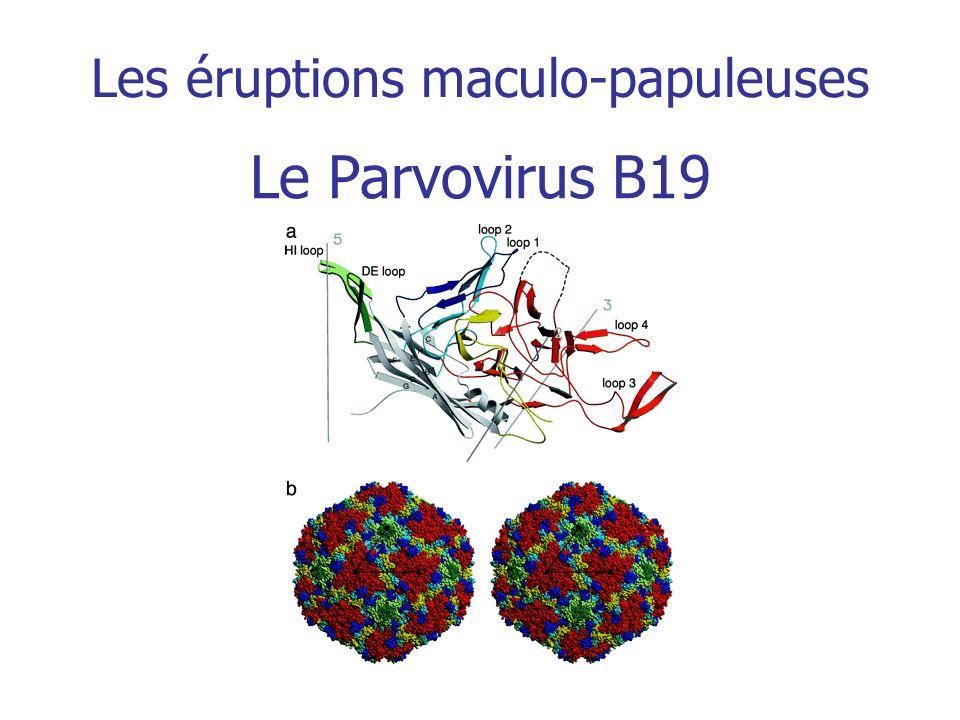 Les éruptions maculo-papuleuses