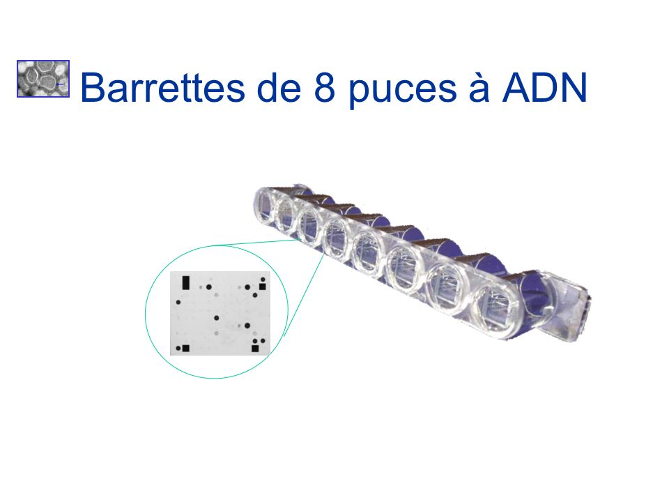 Barrettes de 8 puces à ADN