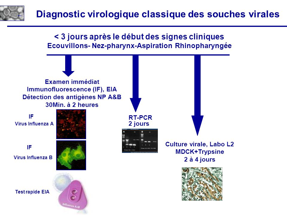 Diagnostic virologique classique des souches virales