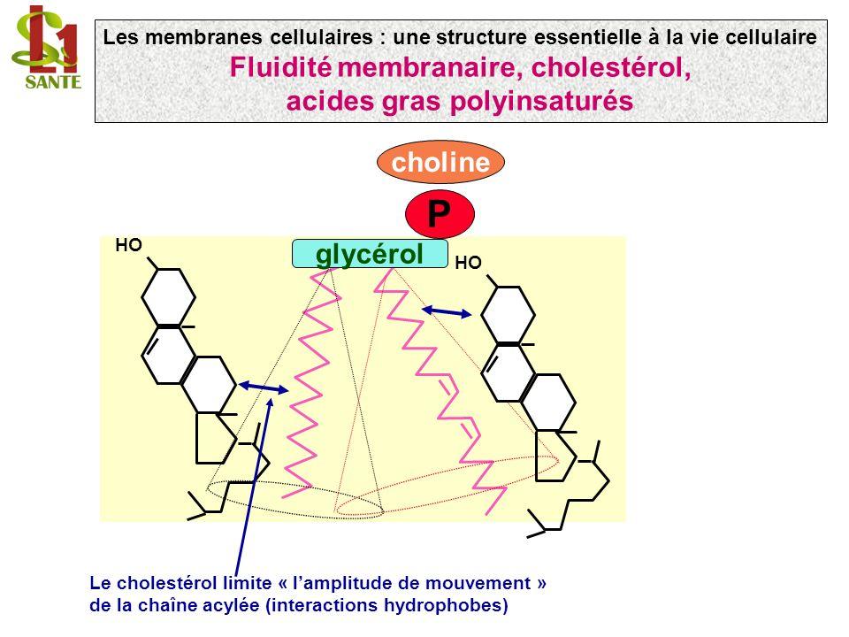 Fluidité membranaire, cholestérol, acides gras polyinsaturés