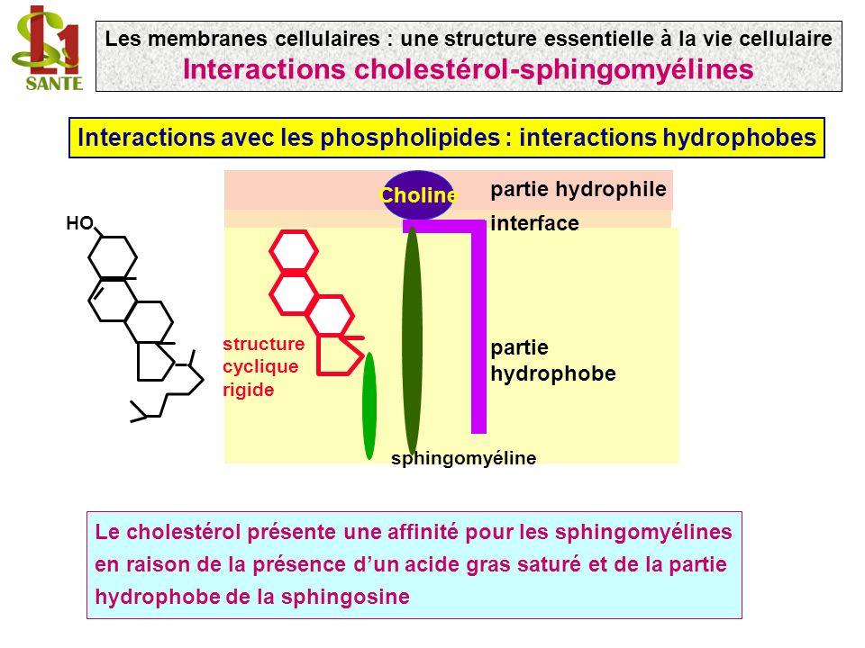 Interactions cholestérol-sphingomyélines