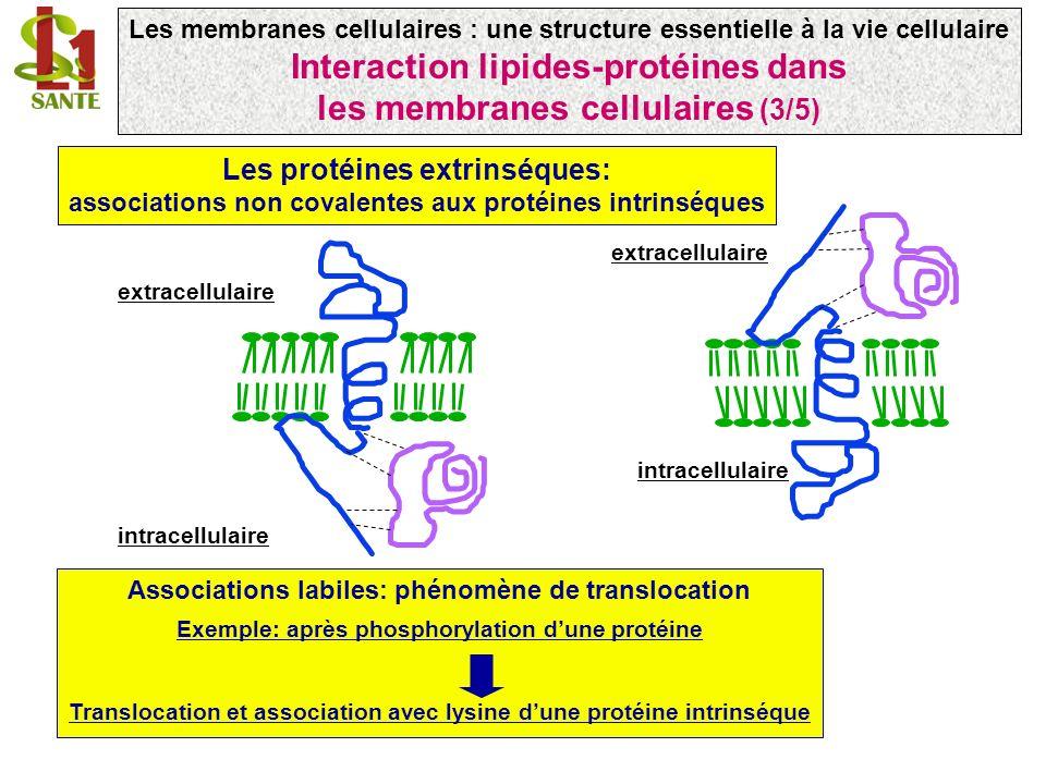 Interaction lipides-protéines dans les membranes cellulaires (3/5)