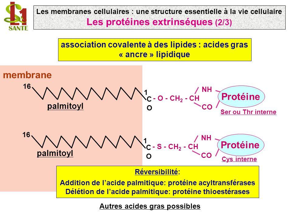 Les protéines extrinséques (2/3)