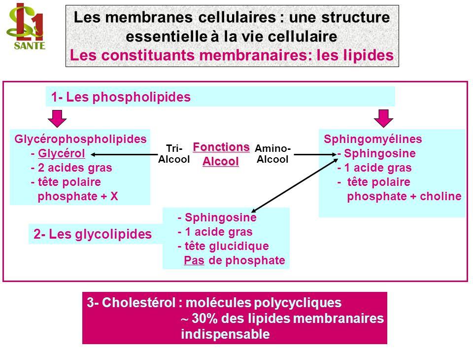 Les constituants membranaires: les lipides