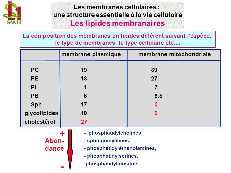 + - Les lipides membranaires Les membranes cellulaires :