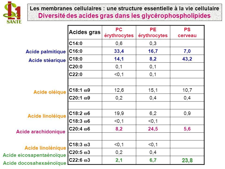 Diversité des acides gras dans les glycérophospholipides