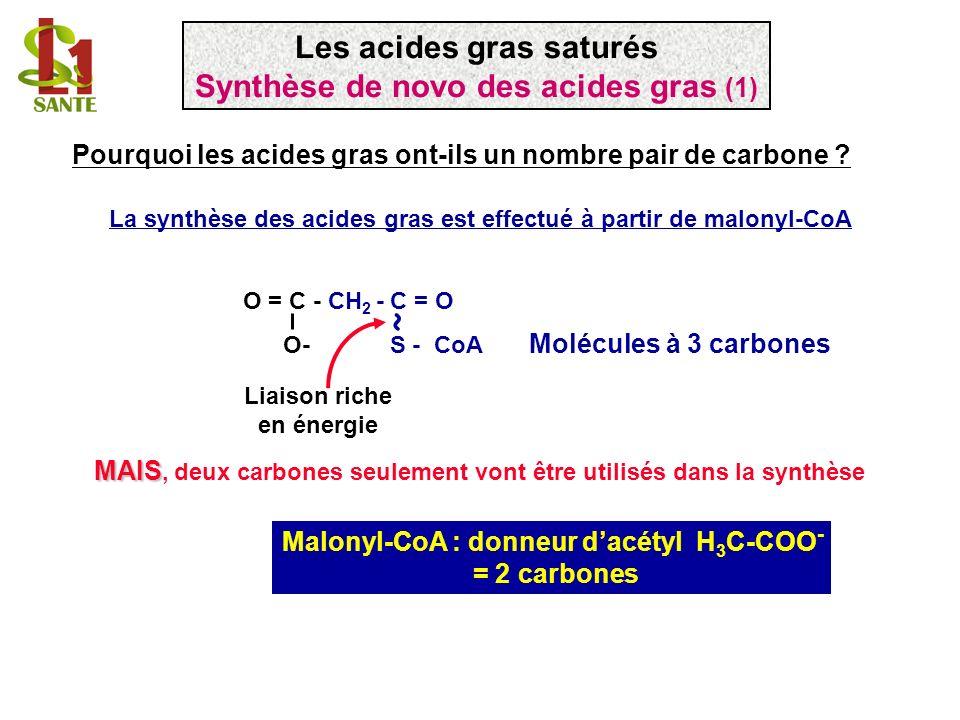 ~ Les acides gras saturés Synthèse de novo des acides gras (1)