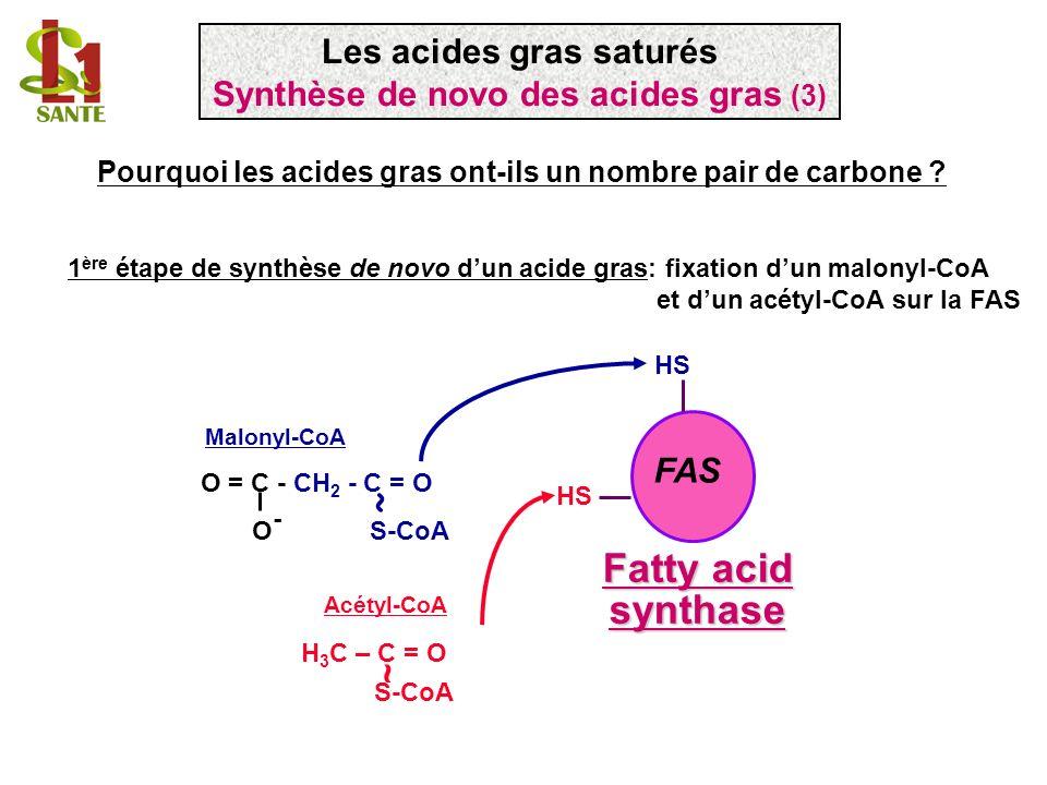 Les acides gras saturés Synthèse de novo des acides gras (3)