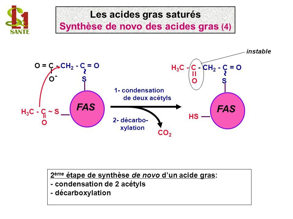 Les acides gras saturés Synthèse de novo des acides gras (4)