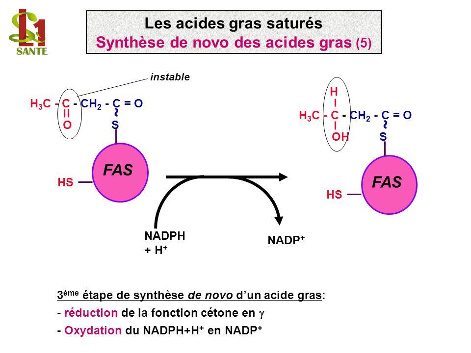 Les acides gras saturés Synthèse de novo des acides gras (5)