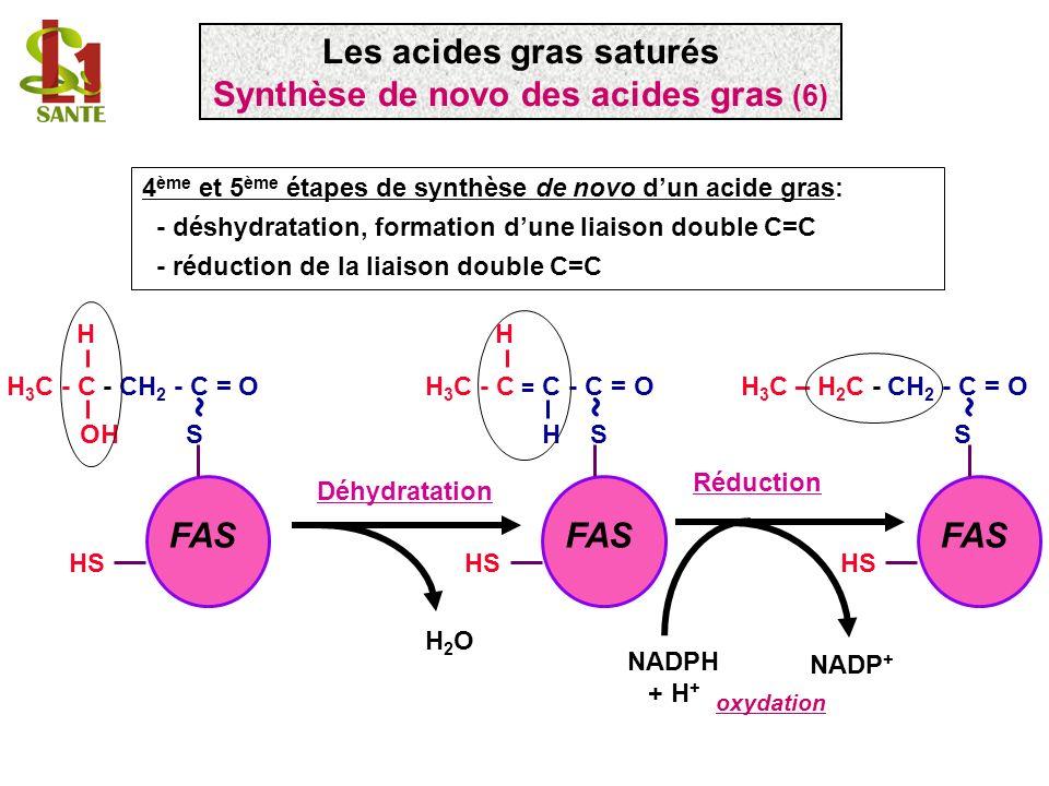 Les acides gras saturés Synthèse de novo des acides gras (6)